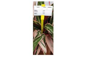 PLASTIC PLANT TAGS FOR LABELS